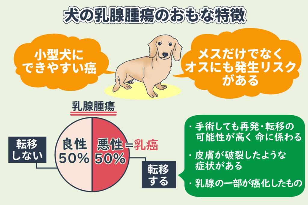 犬の乳腺腫瘍のおもな特徴