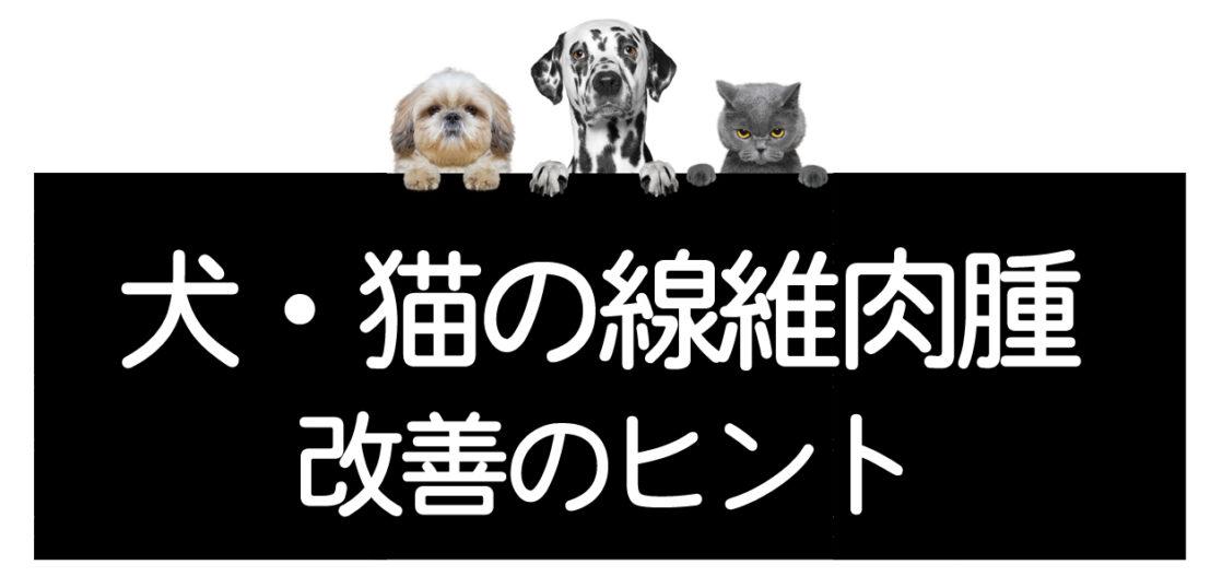 犬や猫の線維肉腫の改善方法