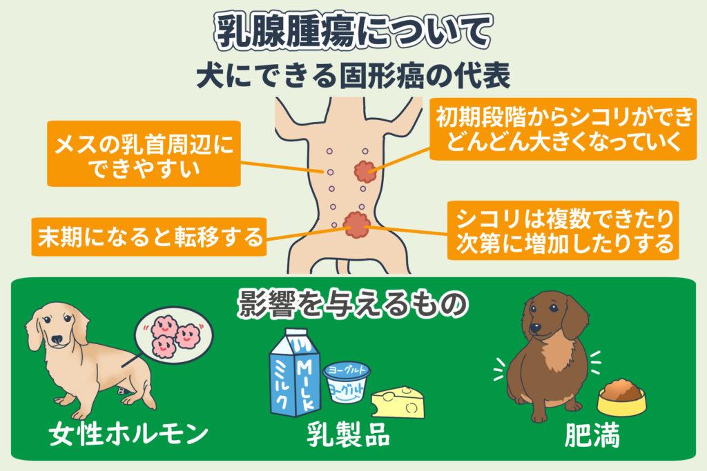 乳腺腫瘍について