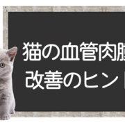 猫の血管肉腫の克服方法