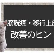 猫の膀胱癌、移行上皮癌の改善方法