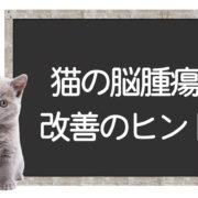 猫の脳腫瘍の克服方法