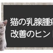 猫の乳腺腫瘍の改善方法