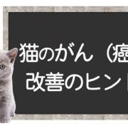猫の癌の克服方法