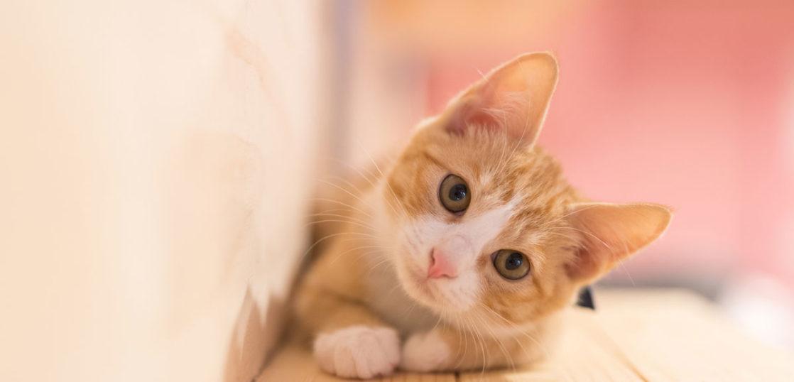 猫の扁平上皮癌改善例