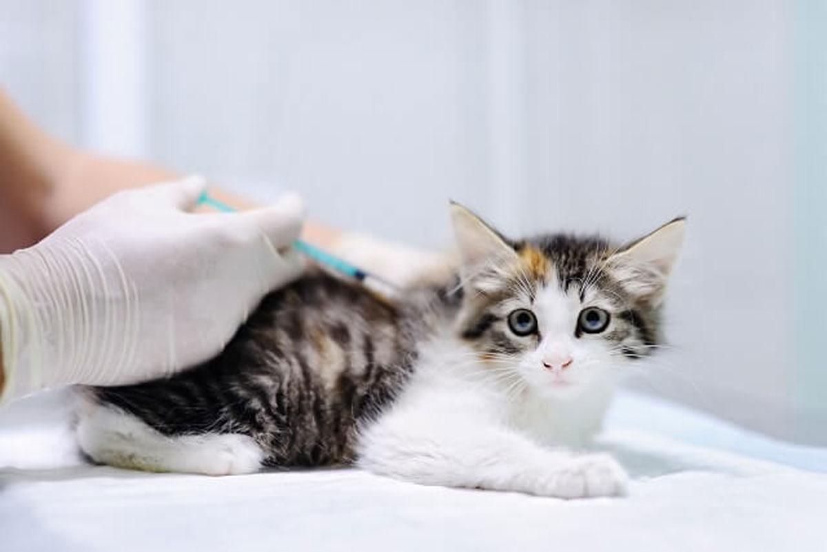 不全 ケア 緩和 猫 腎 末期