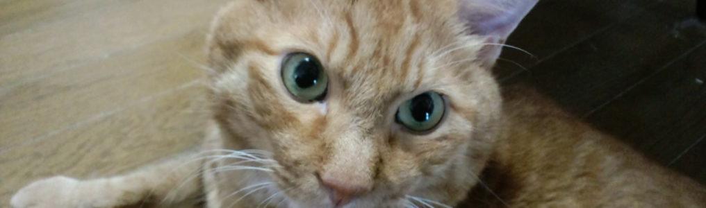 猫のリンパ腫の改善方法