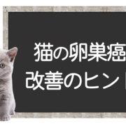 猫の卵巣癌の克服方法