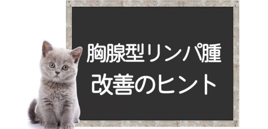 猫の胸腺型リンパ腫克服方法