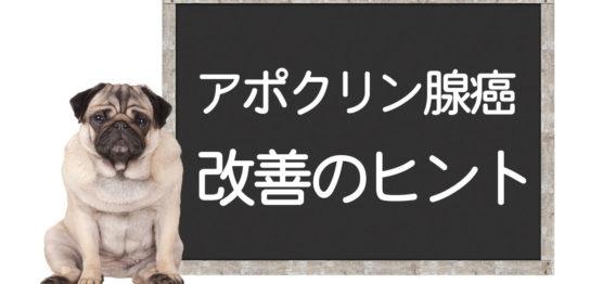 犬のアポクリン腺癌の改善方法