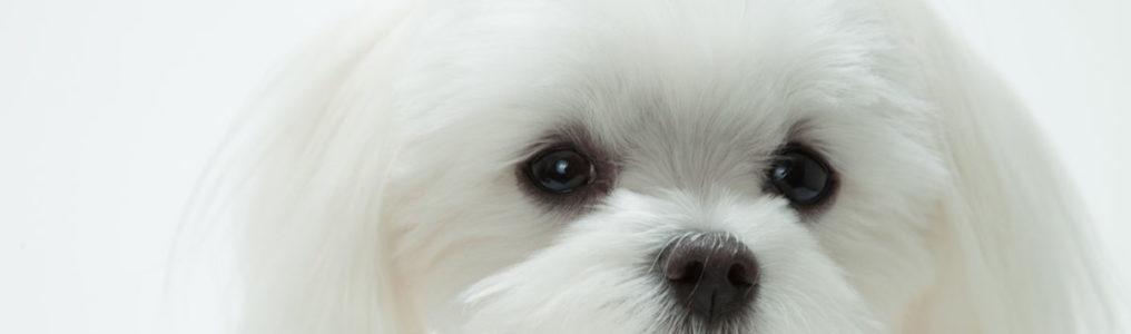 犬の乳腺腫瘍改善例