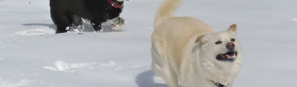 犬のリンパ節転移した肛門周囲腺癌手術後にQOLを維持した方法