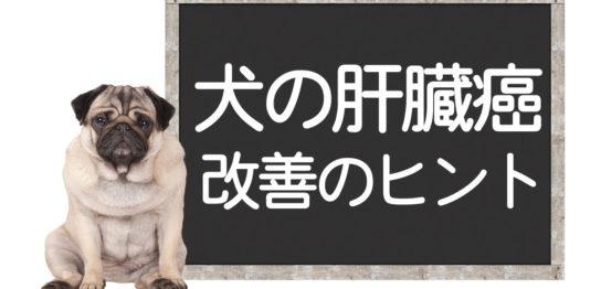 犬の肝臓癌の克服方法