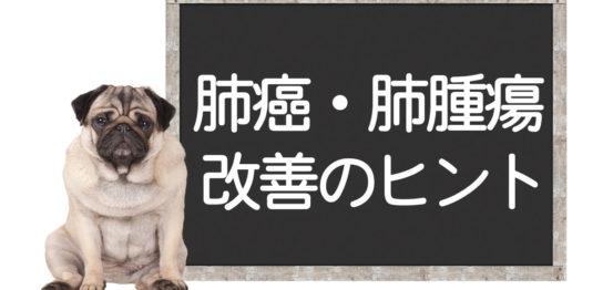 犬の肺癌の改善方法