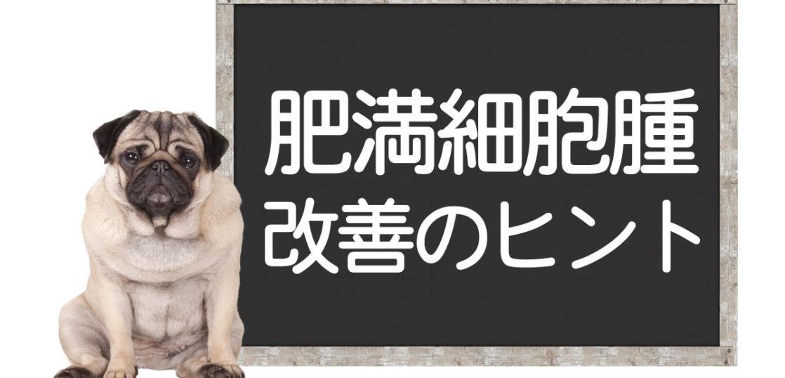 犬の肥満細胞腫改善方法