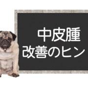 犬の中皮腫の改善方法