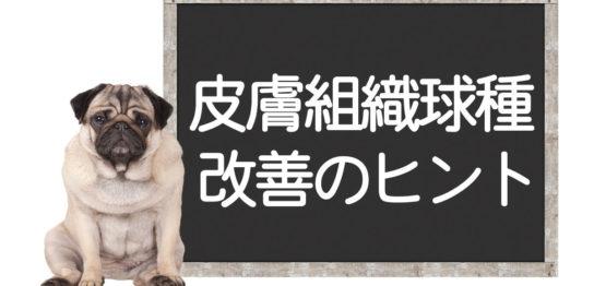 犬の皮膚組織球種の改善方法