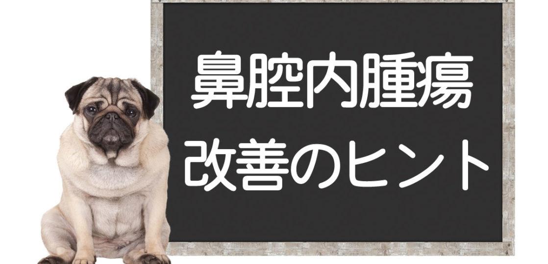 犬の鼻腔内腫瘍の改善方法