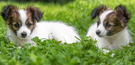 犬の肺腫瘍・肺癌改善例