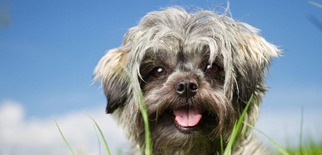 犬のリンパ腫の改善例