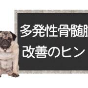 犬の畑津正骨髄腫の改善方法