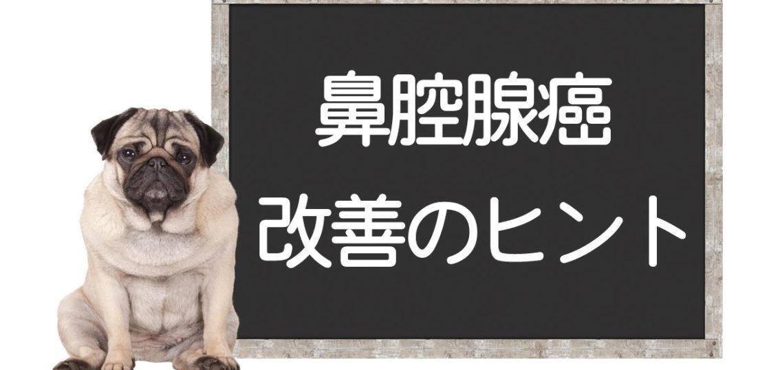 犬の鼻腔腺癌の改善方法