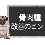 犬の骨肉腫の改善方法