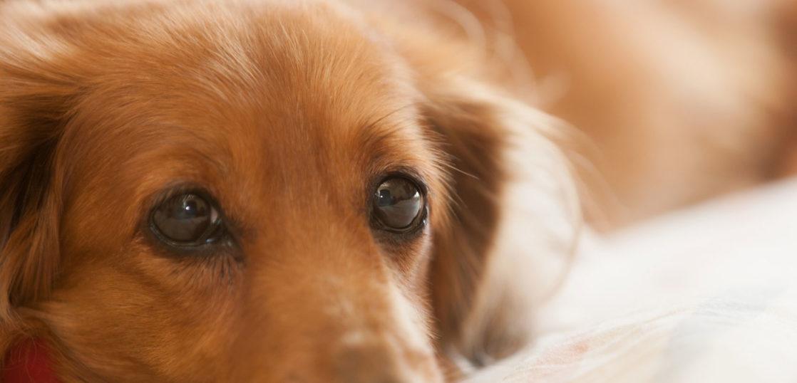 犬の歯茎腫瘤の改善