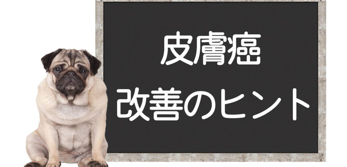 犬の皮膚癌の改善方法