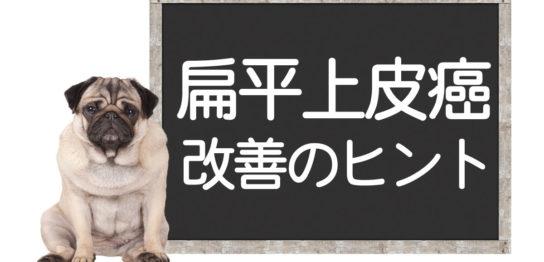 犬の扁平上皮癌の改善方法