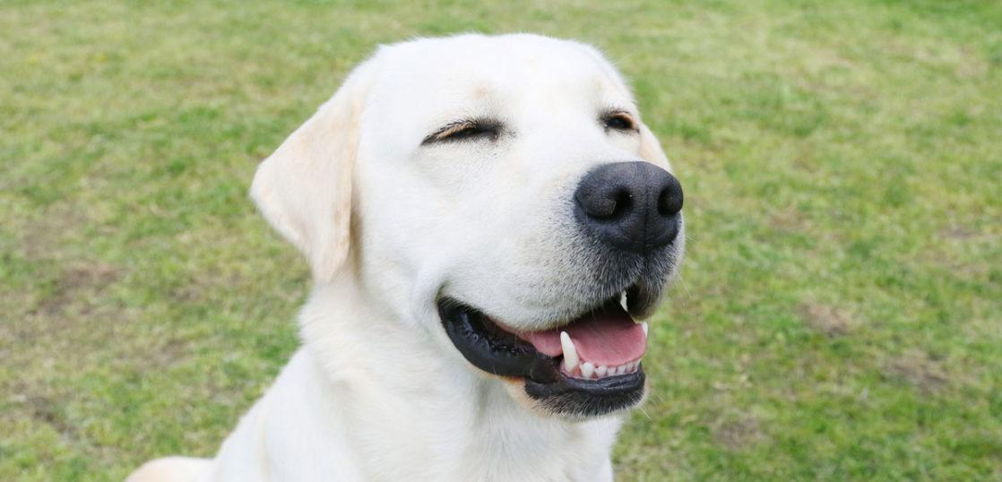 犬の体表腫瘍改善例