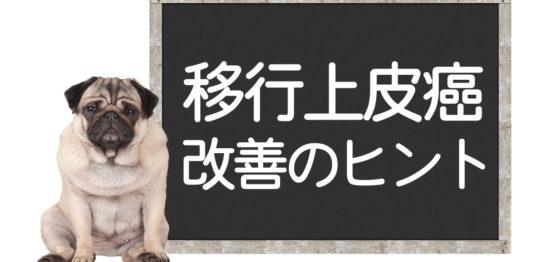 犬の移行上皮癌、膀胱がん克服方法