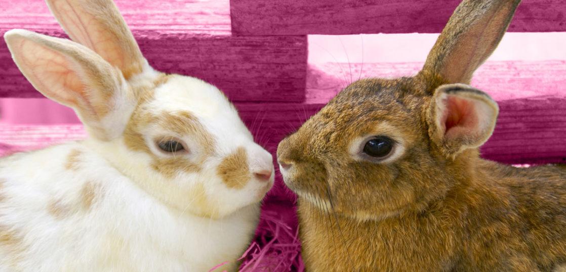 ウサギの肺腫瘍改善例