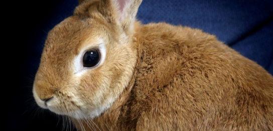 ウサギの子宮癌改善例