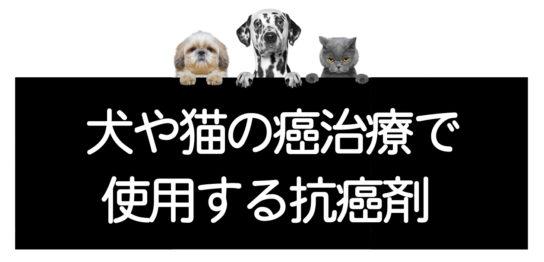 犬猫の癌治療で使用する抗癌剤