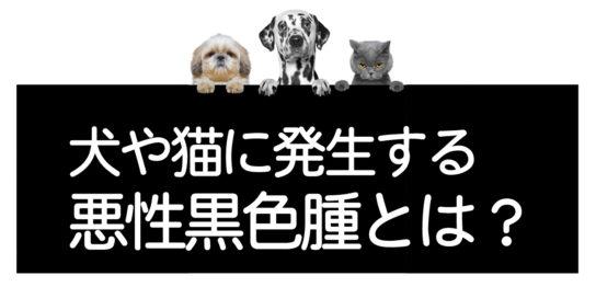 ペットの悪性黒色腫