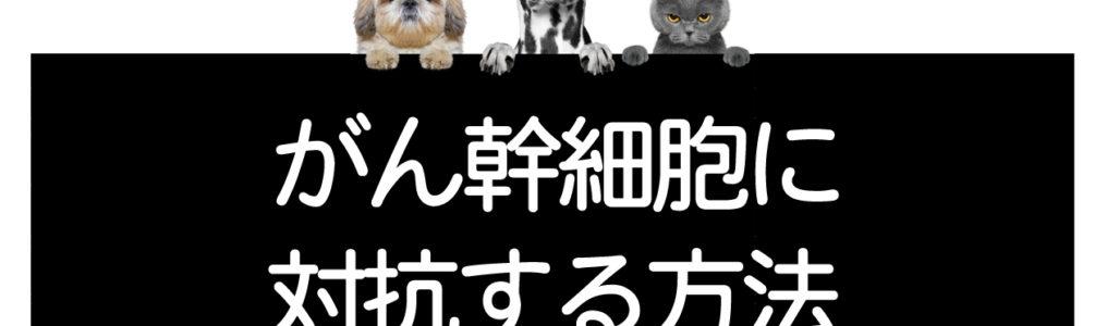 犬猫のがん幹細胞に対抗する方法