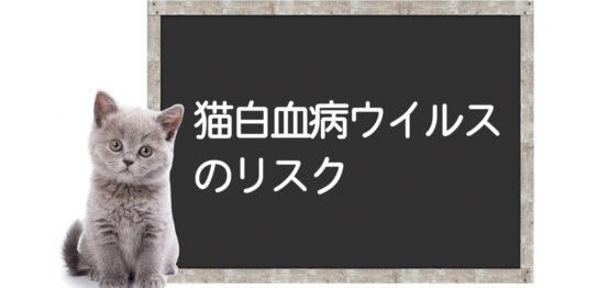 猫白血病ウイルス(FeLV)のリスク