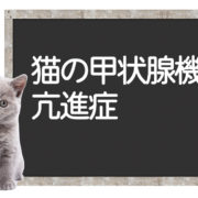 猫の甲状腺機能亢進症の改善法