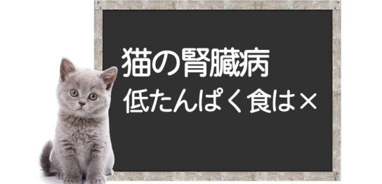 猫の腎臓病の低たんぱく食