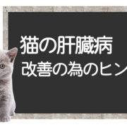 猫の肝臓病克服方法