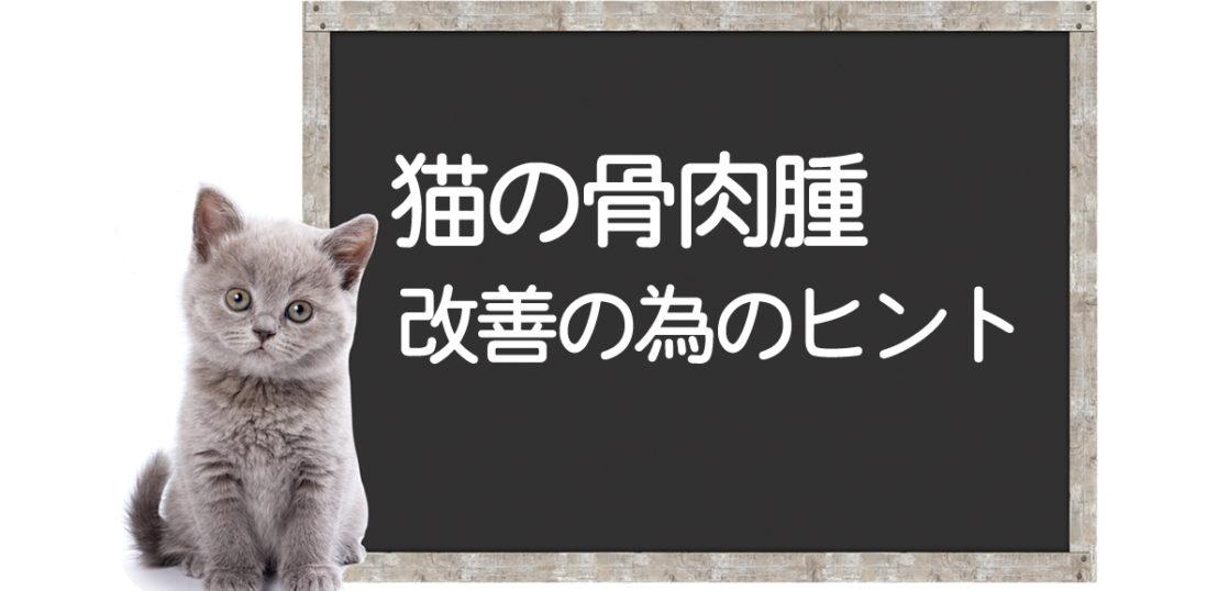 猫の骨肉腫克服方法