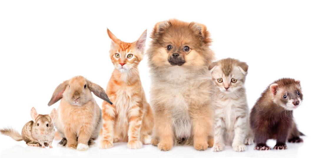 プラセンタで犬猫の肝機能改善