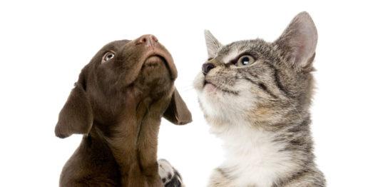 犬猫の皮膚改善例