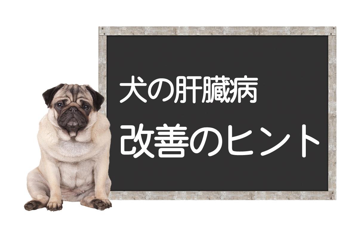 症状 犬 膵炎