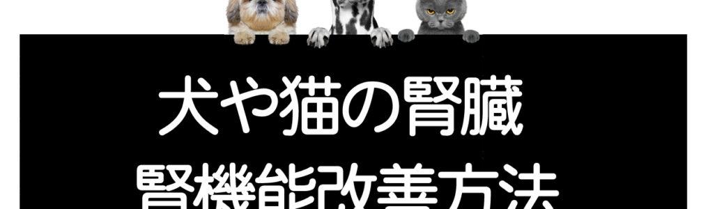 犬や猫の腎機能改善方法