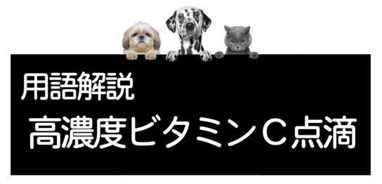犬や猫の高濃度ビタミンC点滴療法