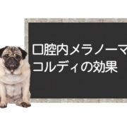 高齢犬ー口腔内メラノーマの子への対処法<コルディ相談>
