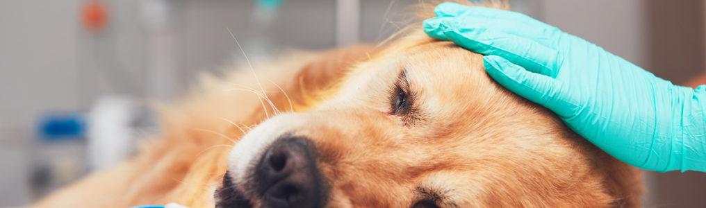 犬猫の手術
