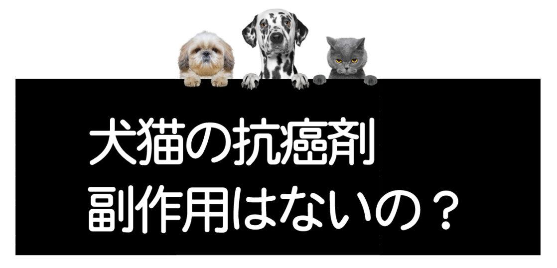 犬猫の抗癌剤のリスク